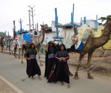 maldhari-women-with-animal